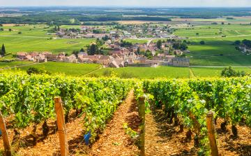 Paris to Nice through Vineyards & Mountains