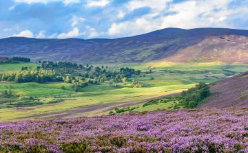 Orkney & the Highlands